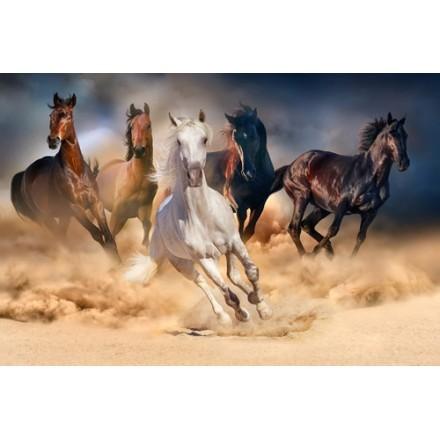 Κοπάδι από Άλογα