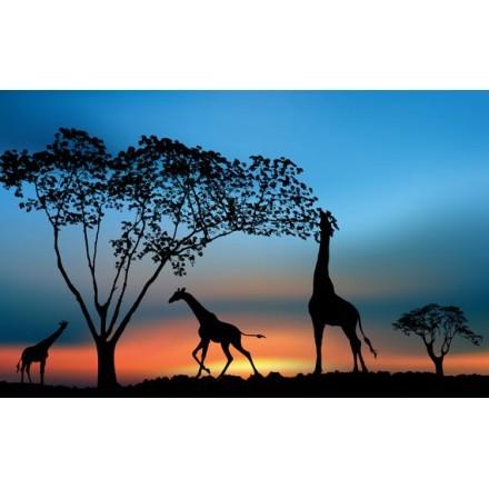 Αφρικανική άγρια φύση το ηλιοβασίλεμα