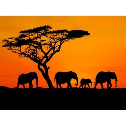 Ελέφαντες στην Αφρική