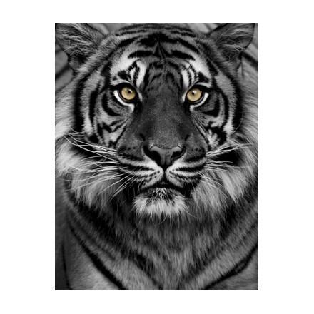 Μάτια τίγρης