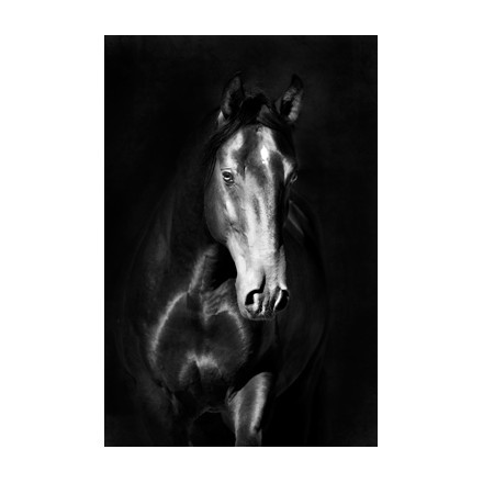 Μαύρο άλογο kladruby