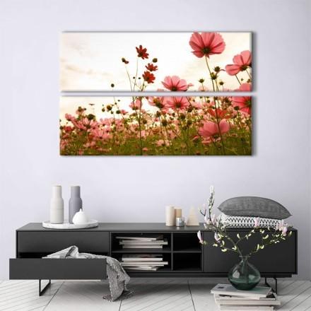 Λουλούδια αγρός