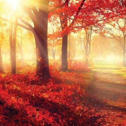 Κόκκινο φθινοπωρινό τοπίο
