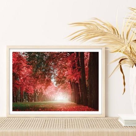 Ηλιόλουστο κόκκινο δάσος
