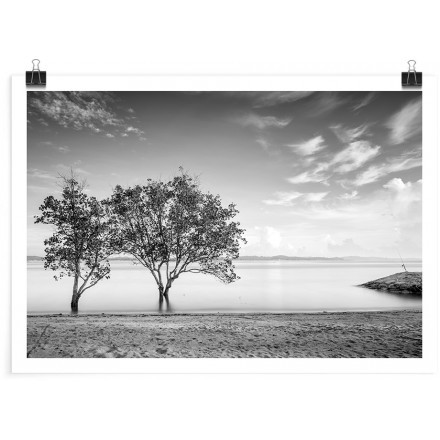 Παραλία με δέντρα