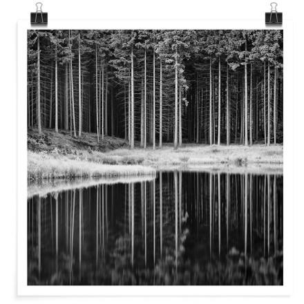 Γκρίζο τοπίο με αντανάκλαση δέντρων στη λίμνη