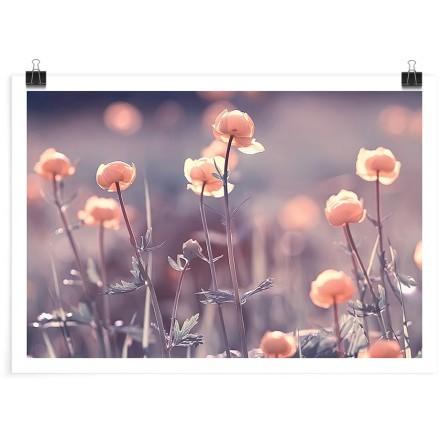 Κήπος με τριαντάφυλλα
