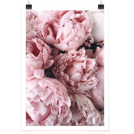 Ροζ παιώνιες