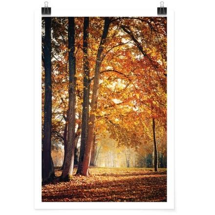 Πορτοκαλί δάσος