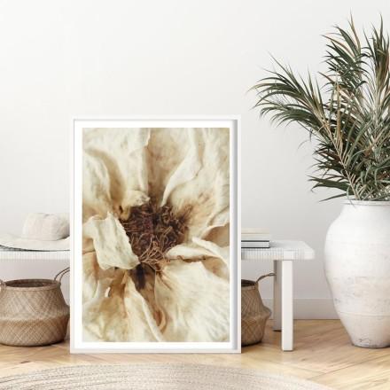 Πορτρέτο λευκού λουλουδιού