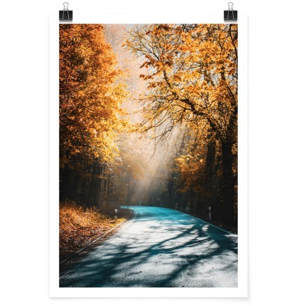 Δρόμος ανάμεσα στα ψηλά δέντρα