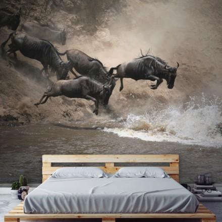 Ζώα πηδούν στο νερό