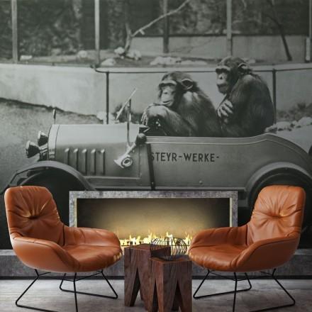 Δύο χιμπατζήδες