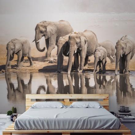 Οικογένεια των ελεφάντων