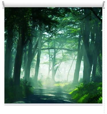 Τροπικό δάσος, Φύση, Ρολοκουρτίνες