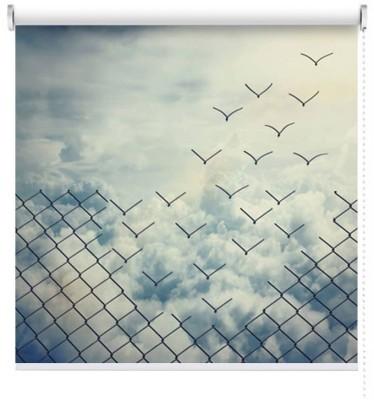 Ελευθερία, Φύση, Ρολοκουρτίνες
