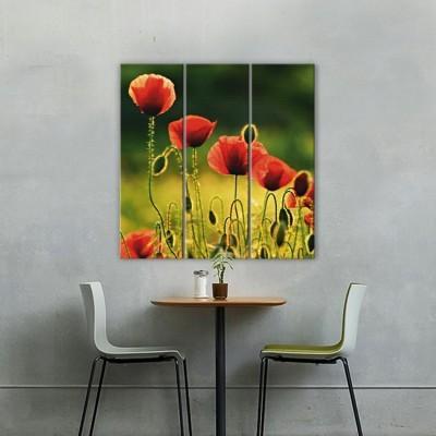 Παπαρούνες, Φύση, Multipanel