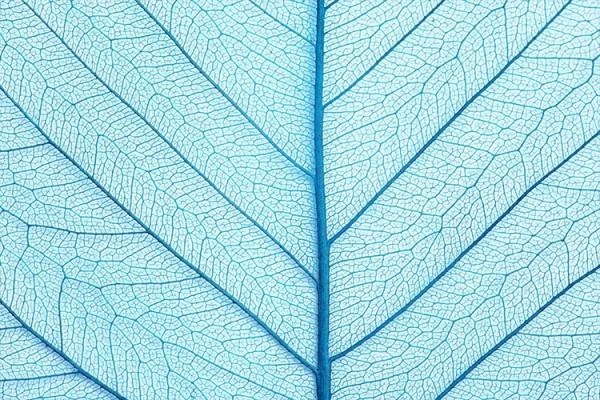 Γαλάζιο φύλλο