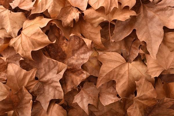 Φύλλα το φθινόπωρο