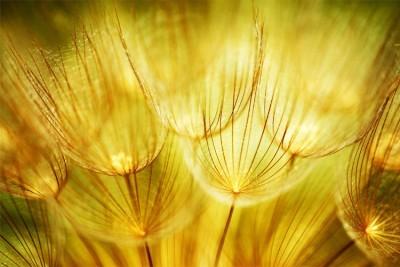 Φύση, Φύση, Image Gallery
