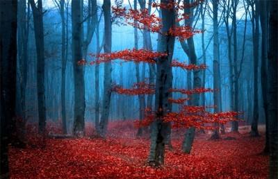 Κόκκινα Φύλλα, Φύση, Image Gallery