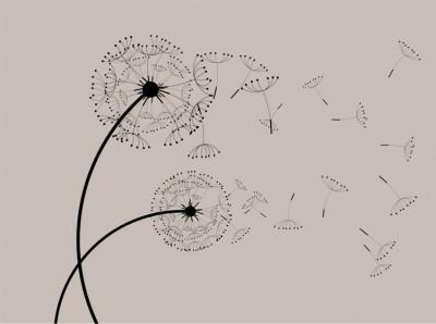 Κάνε μια Ευχή, Φύση, Image Gallery