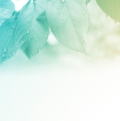 Σταγόνες Δροσιάς, Φύση, Image Gallery