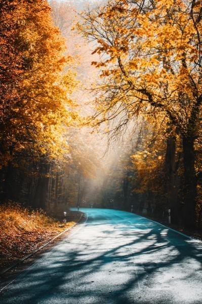 Δρόμος στο φθινοπωρινό δάσος