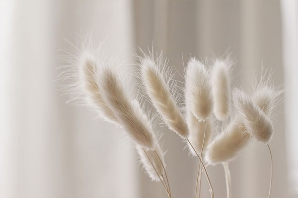 White fluffy grass