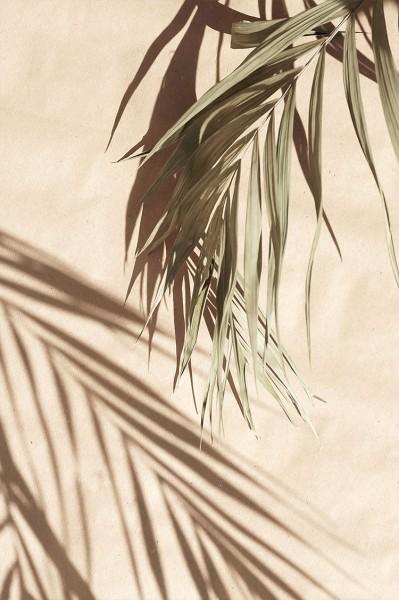 Σκιά φύλλου στον τοίχο