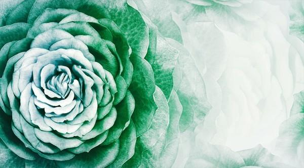 Άνθος πράσινου λουλουδιού