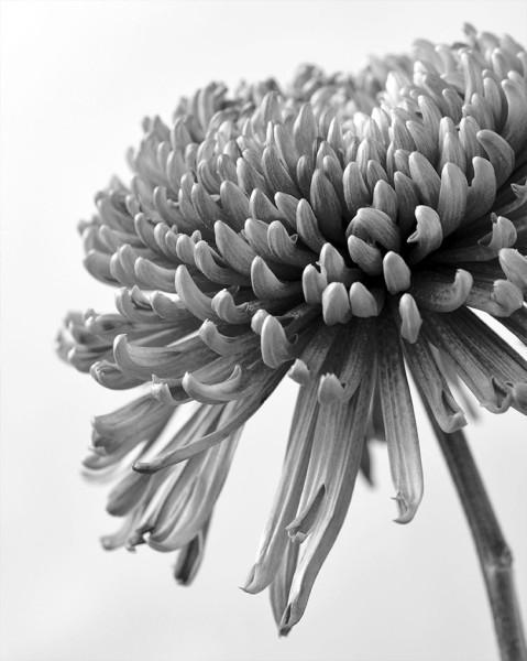 Γκρίζο φόντο με λουλούδι
