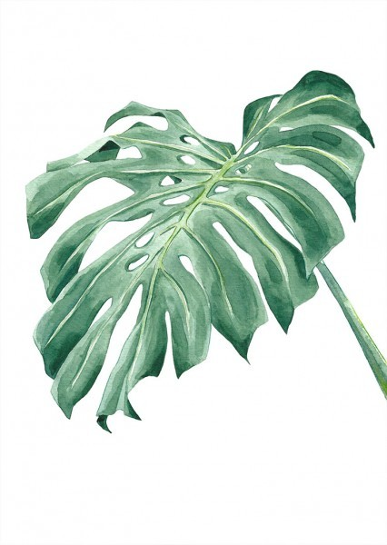Tropical leave