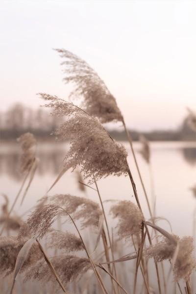 Φυτά μπροστά στη λίμνη