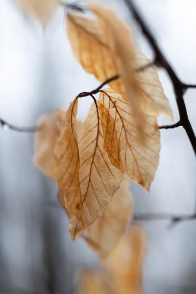 Κλαδί με καφέ φύλλα