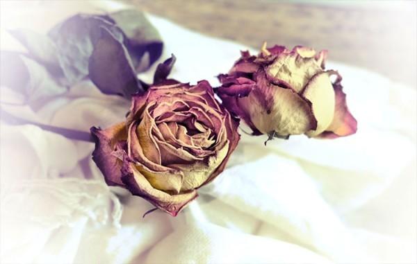Vintage φόντο με τριαντάφυλλα