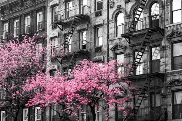Ροζ ανθισμένο δέντρο στη Νέα Υόρκη