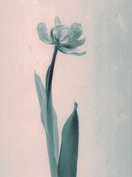 Πράσινο λουλούδι