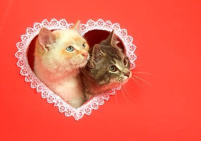 Ερωτευμένες γάτες, Ζώα, Image Gallery