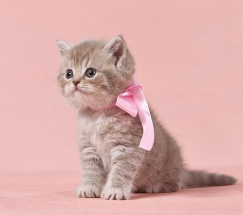 Χαριτωμένη γάτα