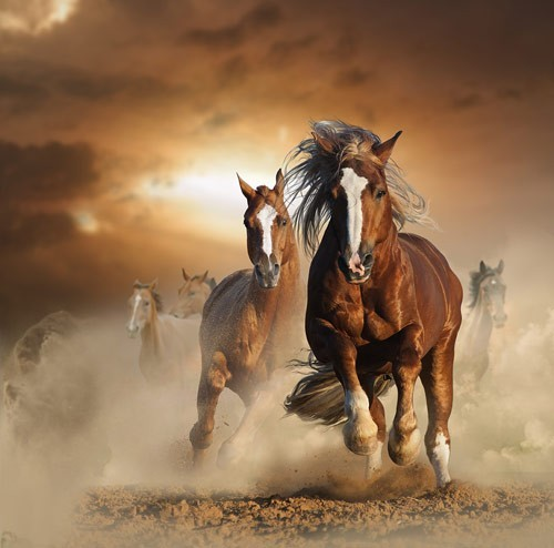 Άγρια άλογα