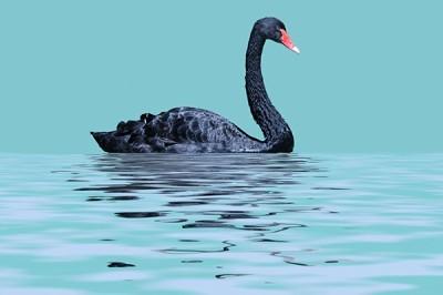 Μαύρος κύκνος, Ζώα, Image Gallery