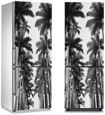 Φοίνικες στον Εθνικό κήπο Φύση Αυτοκόλλητα ψυγείου 50 x 85 εκ.