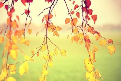 Φύλλα, Φύση, Ταπετσαρίες Τοίχου