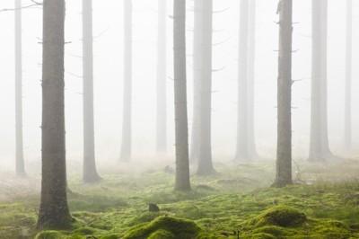 Ομίχλη σε δάσος