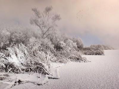 Χιονισμένοι θάμνοι