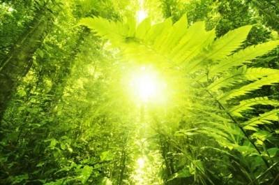 Ήλιος σε τροπικό δάσος