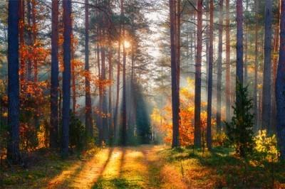 Ηλιοβασίλεμα στο Δάσος, Φύση, Image Gallery