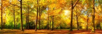 Δάσος το φθινόπωρο