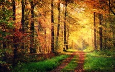 Δρόμος στο Δάσος, Φύση, Image Gallery